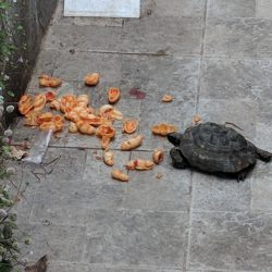 even turtles eat pasta in italy